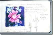 geraniumsm