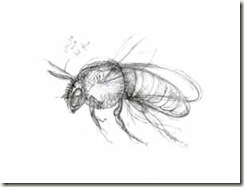 sketch colletes