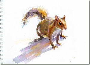 squirrel sketch blog