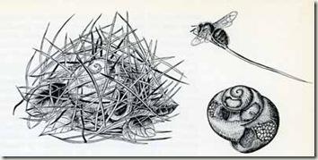 snail shell bee Frisch