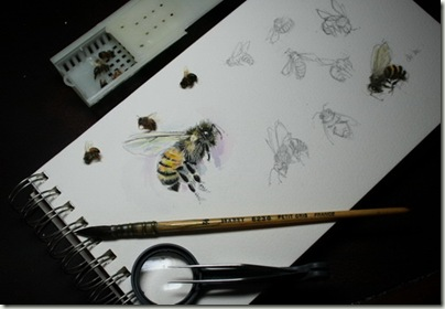 bee sketchessms