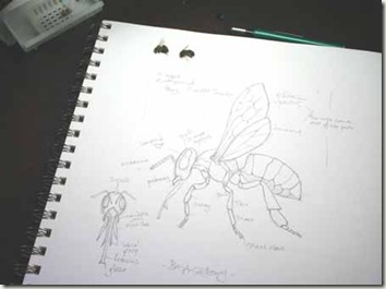 bee sketch anatomy