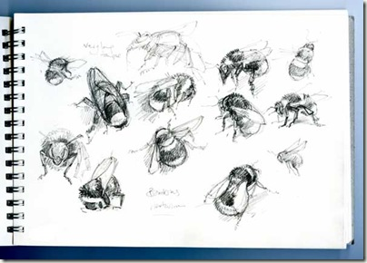 bee sketches sm