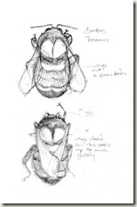 Bombus tricolour pencil sketch sm