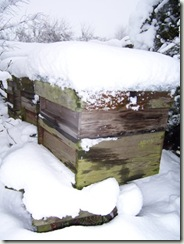 beehive in snow