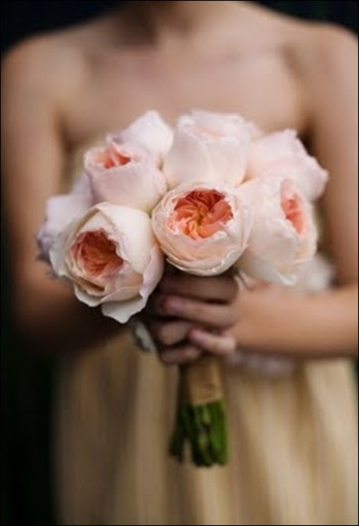 12 garden roses JL Designs
