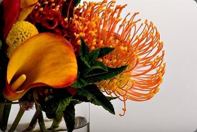 035 bella fiori