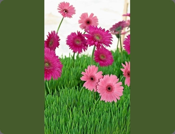 19 azalea floral design CT