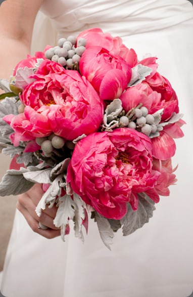 coral charm peony, dusty miller and silver brunia holly chapple