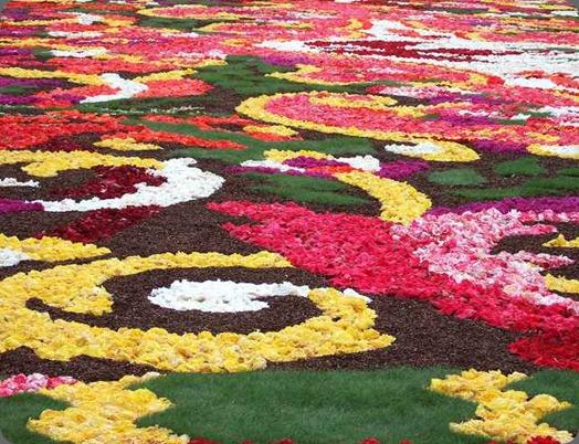 fcarpet0808-09 bloemenvanthura.com