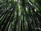 竹林步道@京都
