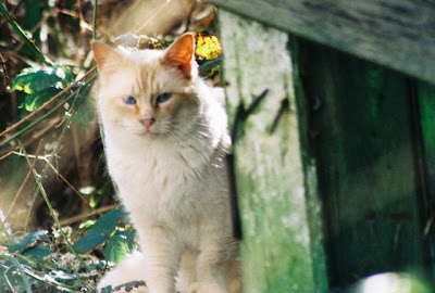 Young feral cat photo