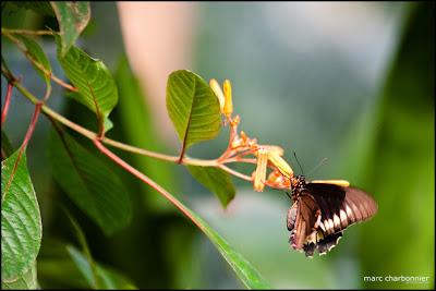 papillorama-3.jpg