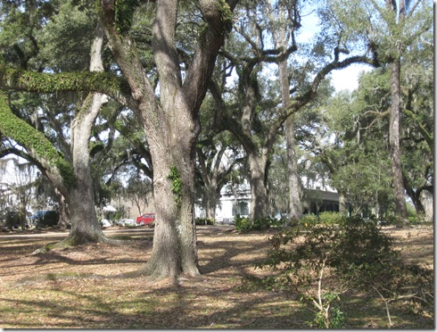 THE MYRTLES 005