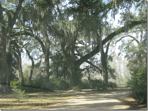 THE MYRTLES 076