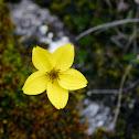 Flores Páramo