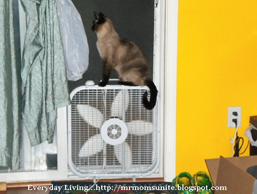 photo of Yum Yum sitting on a fan