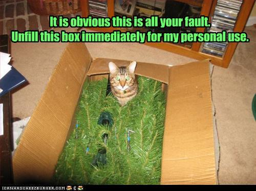 photo of a cat inside a Christmas tree box looking out at us