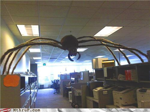 photo of a huge fake spider in an office