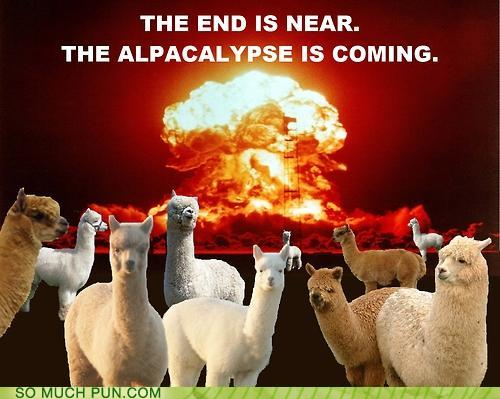 image of a bunch of alpacas against an apocalyptic backdrop