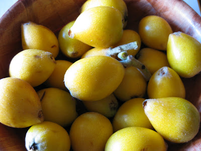 Other Foods I'm Eating- Loquats!