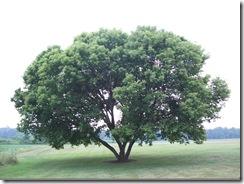 在彼得惠特梅尔农场的树
