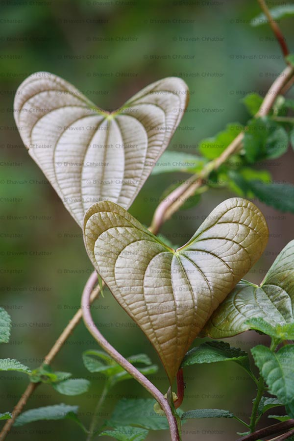 It's monsoon time; love is in the air. Plants are also in love in this season!