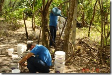 Preparativo Horta Organica Suspensa 22-03-10