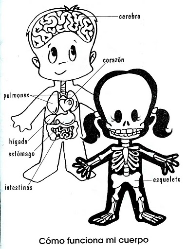 El Cuerpo Humano Para Colorear