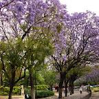 Jardines de Murillo - 2.jpg