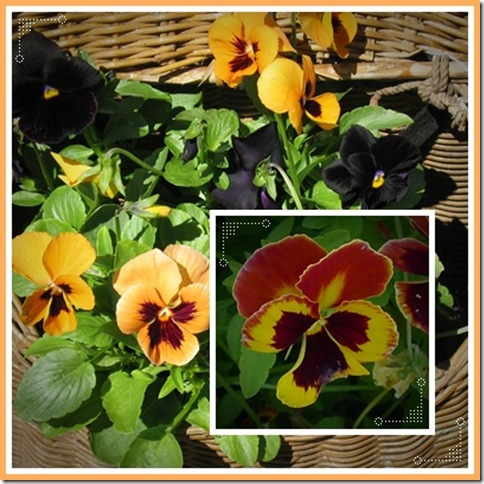 pansy2collage