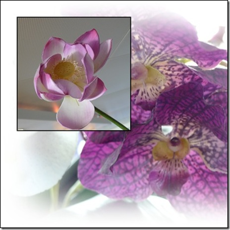 orchid layer