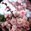 Fond d'écran animé Sakura icon