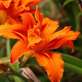 by Matt Gullick - Flowers Flower Arangements ( love, postcard, valentine's day,  )
