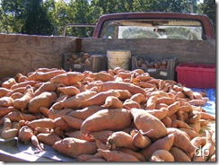 The harvest in the bed of the truck