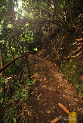 The Path to Mambukal's Waterfalls
