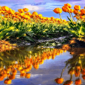 Reflective Tulip Garden LWP icon