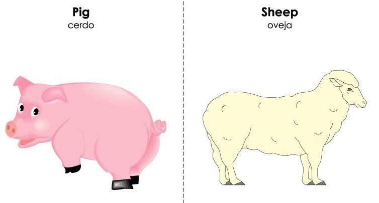 tarjetas ilustradas vocabulario inglés (30)