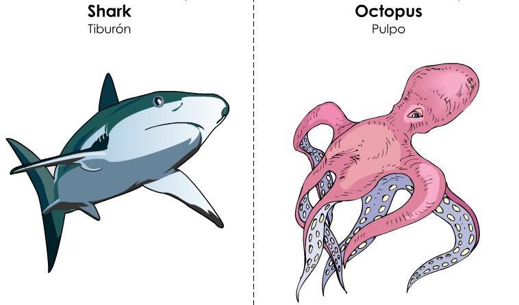 tarjetas ilustradas vocabulario inglés (26)