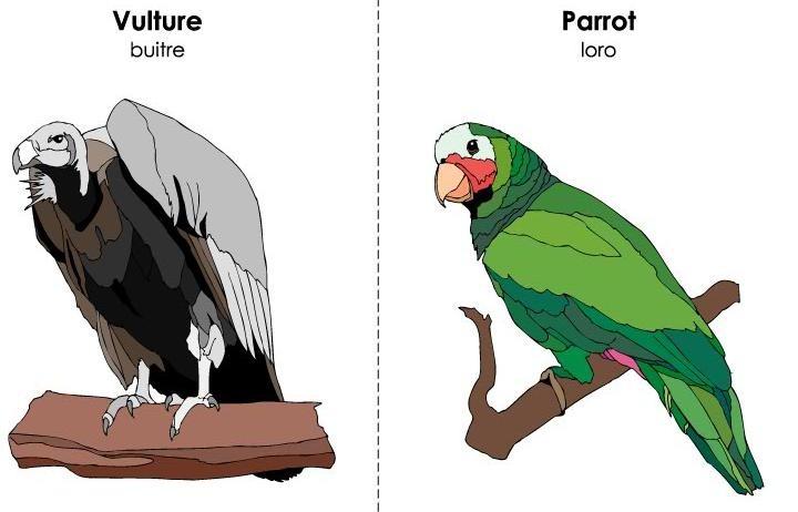 tarjetas ilustradas vocabulario inglés (46)