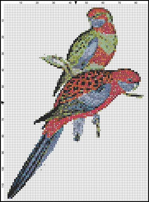 Australian Rosellas-blocks and symbols