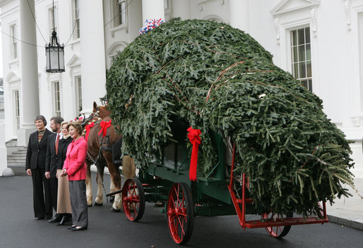 East Wing Rules Michelle S First White House Christmas Tree
