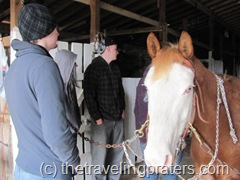 a lesson on preparing horses to ride