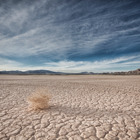Middle of Nowhere by Andrew Ng - Landscapes Deserts ( las vegas, desert, isolation, nevada, middle of nowhere, tumbleweed, salt flats, lake flats )
