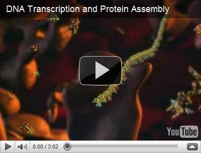 Sintesis Protein 3