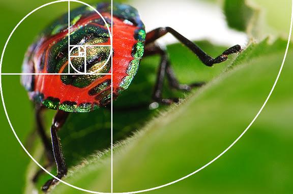 http://lh6.ggpht.com/_x9x16pAoe3E/TBo26cVO0OI/AAAAAAAAAA0/205ywOhkKes/s576/fibonacci.jpg