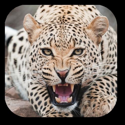 豹動態桌布 LOGO-APP點子