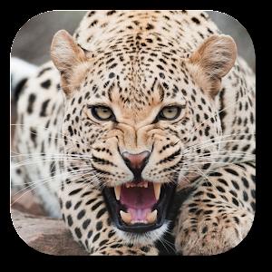 豹動態桌布 個人化 App Store-愛順發玩APP