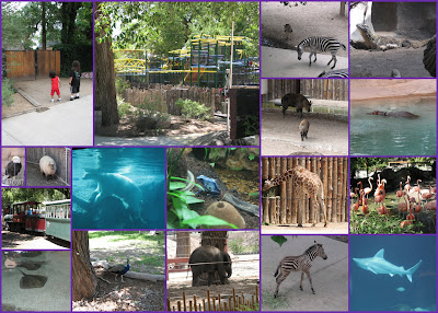 Zoo Pictures