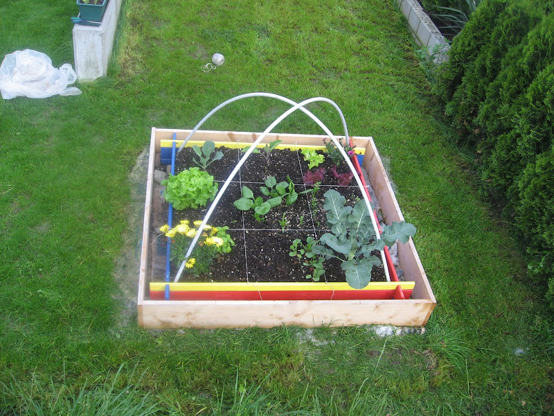 Organic Vegetable Gardening With Square Foot Gardening